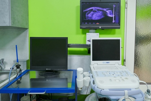 RTG digitalizace, ultrazvuk, endoskop